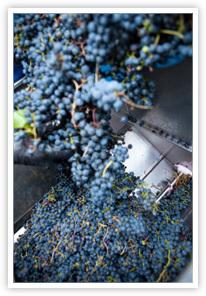 grape crusher